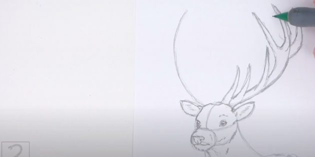 Как нарисовать оленя: прорисуйте левый рог