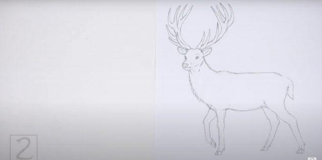 Как рисовать оленя: прорисуйте шерсть и хвост