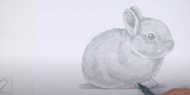 Как нарисовать реалистичного сидящего кролика
