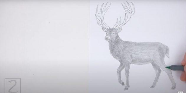 Как рисовать оленя: закрасьте туловище и ноги