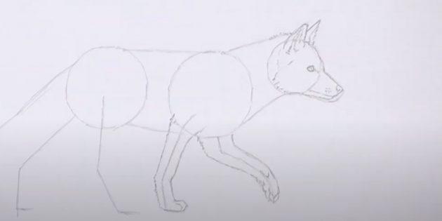 Как нарисовать лису: Проработайте передние лапы