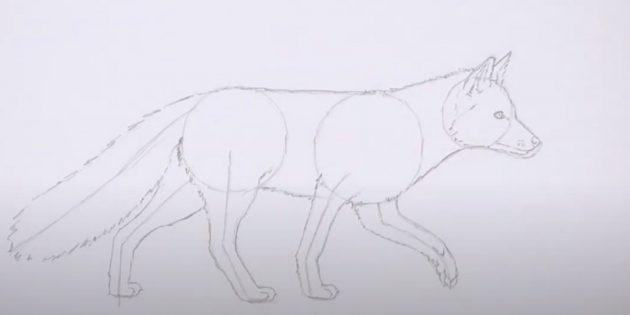 Как нарисовать лису: Нарисуйте хвост и шерсть на контуре