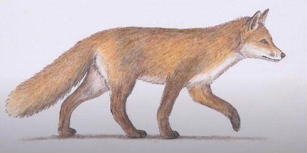 Как нарисовать лису: Обозначьте тень от лисы