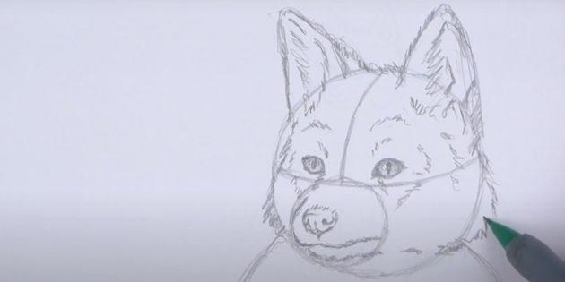 Как нарисовать лису: Имените форму головы
