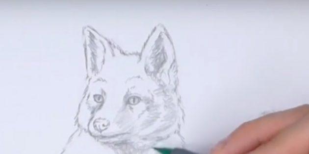 Как нарисовать лису: Закрасьте уши и морду
