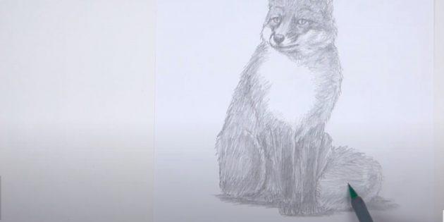 Как нарисовать лису: Закрасьте тело, лапы и хвост