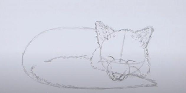 Как нарисовать лису: Детализируйте хвост