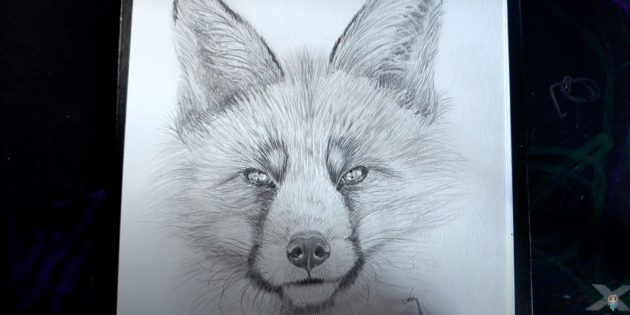 Реалистичная морда лисы