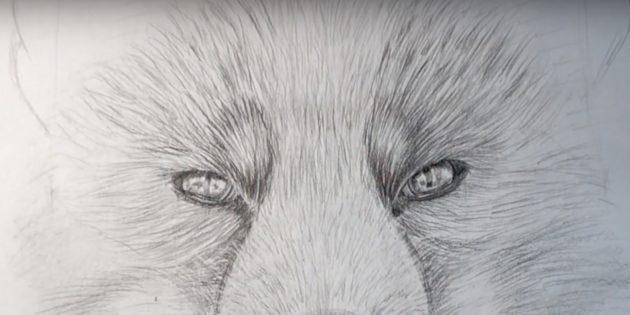 Как нарисовать лису: Прорисуйте шерсть