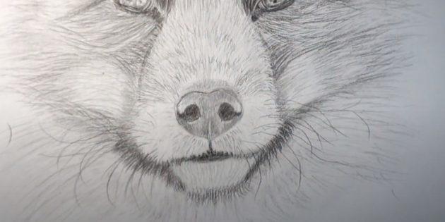 Как нарисовать лису: Нарисуйте усы