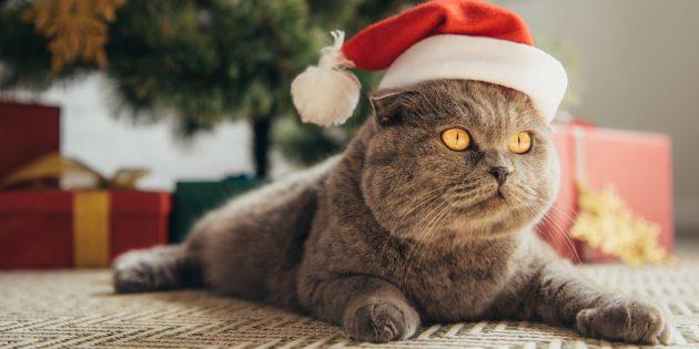 забавные новогодние традиции: попробуйте подслушать домашних животных