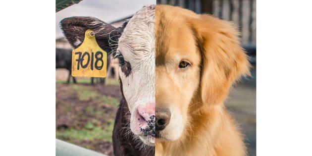 Эмпатия к животным и спесишизм