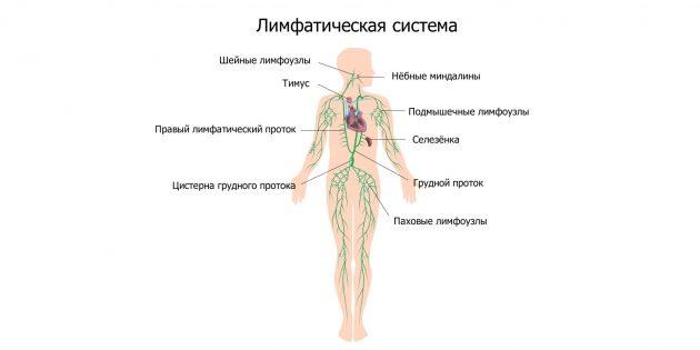 Лимфатическая система: воспаление лимфоузлов