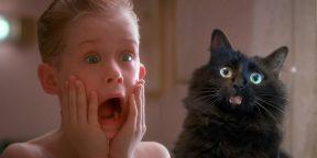 Видео дня: если бы в фильме «Один дома» была кошка
