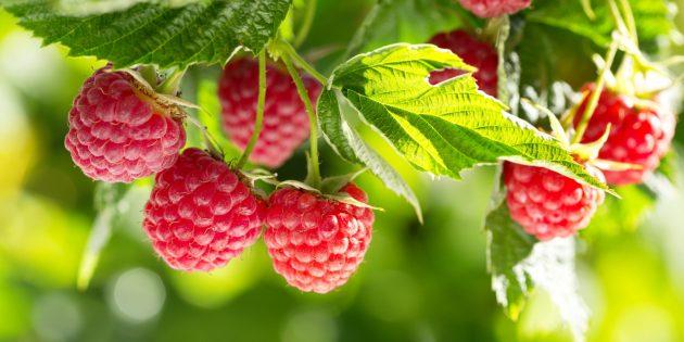 Помогают ли похудеть кетоны малины