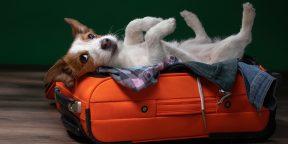 S7 разрешила провозить домашних животных в салоне самолёта на соседнем кресле