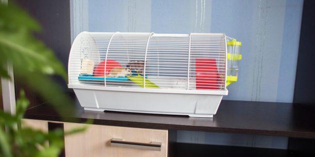 Для содержания домашней крысы нужна клетка