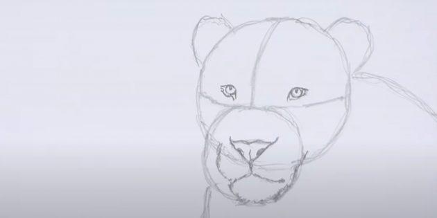 Как нарисовать льва: Нарисуйте подбородок