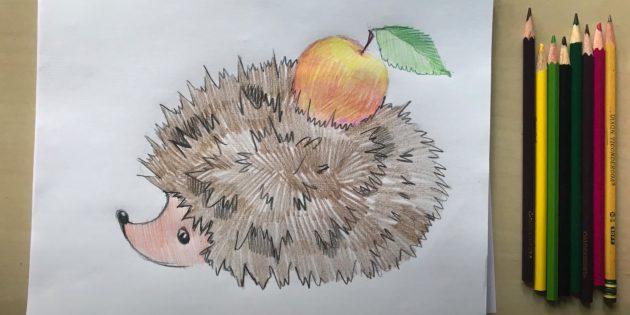 Рисунок ёжика цветными карандашами