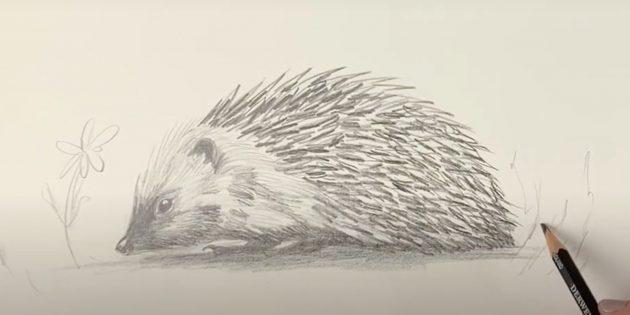 Рисунок ежа простым карандашом