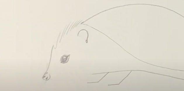 Как рисовать ёжика: детализируйте ухо