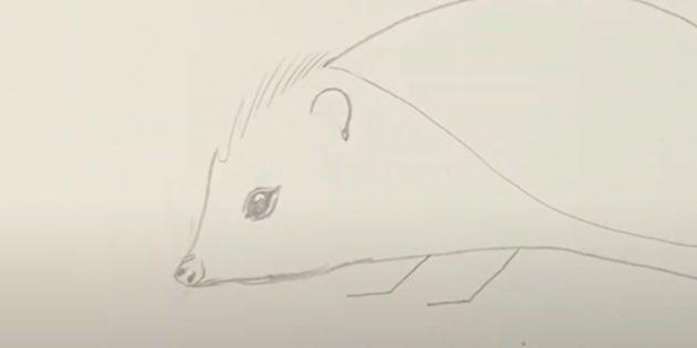 Как рисовать ёжика: нарисуйте подбородок