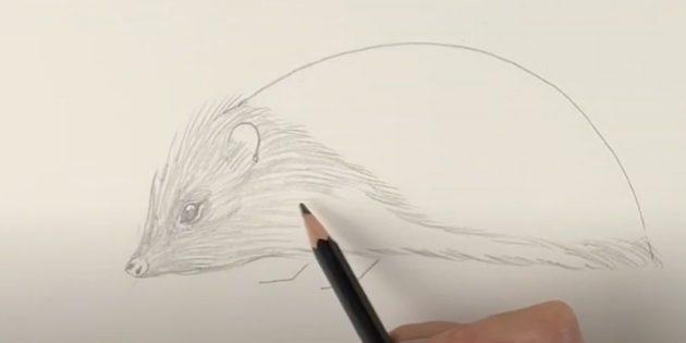 Как нарисовать ежа: нарисуйте шерсть на мордочке