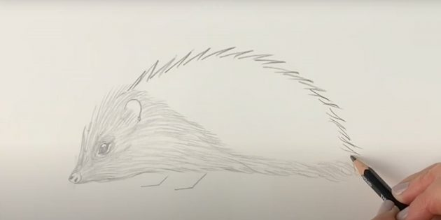 Как нарисовать ежа: нарисуйте иголки