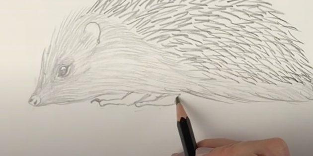 Как нарисовать ежа: нарисуйте лапы