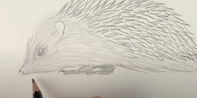 Как нарисовать ежа: закрасьте лапы