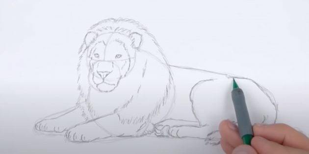 Как нарисовать льва: Затемните спину