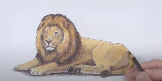 Как нарисовать льва: Сделайте льва ярче