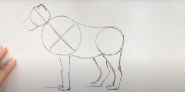 Как нарисовать льва: Нарисуйте заднюю лапу