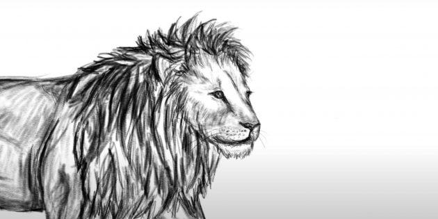 Как нарисовать льва: Детализируйте морду
