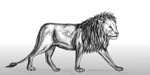 Как нарисовать льва: Сделайте тень