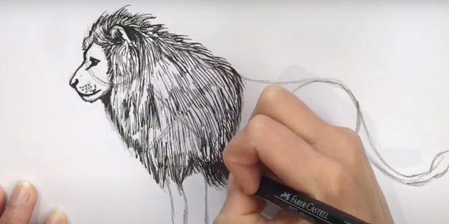 Как нарисовать льва: Обведите морду, детализируйте гриву