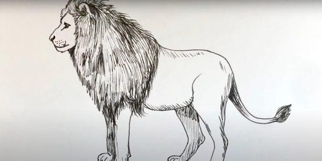 Как нарисовать льва: Сотрите набросок