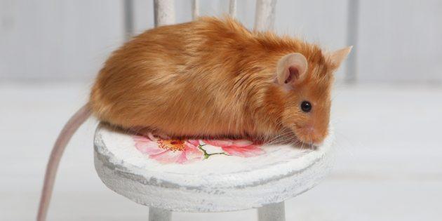 Сатиновая декоративная крыса