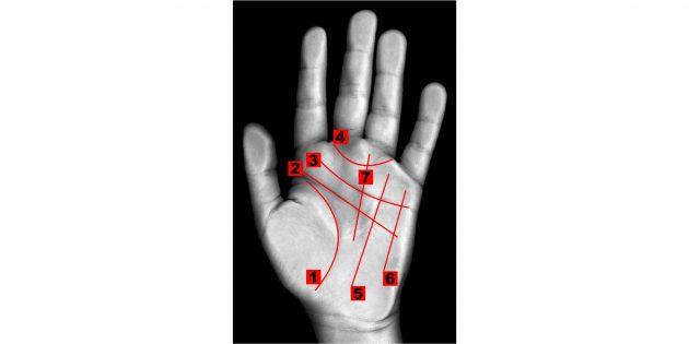 Хиромантия: расположение линий на руке согласно хиромантским воззрениям