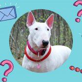 Что нужно знать о воспитании собаки?