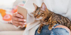 11 заблуждений о смартфонах, в которые вы до сих пор верите, а зря