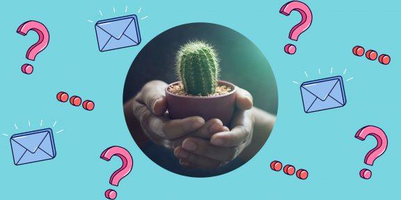 Как правильно ухаживать за кактусом?