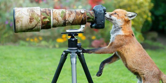«И мне покажи»: тред с фото диких животных, которые мешают себя фотографировать
