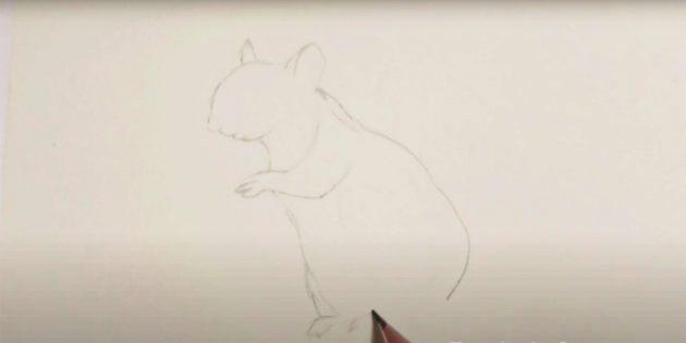 Как нарисовать белку: нарисуйте контур живота