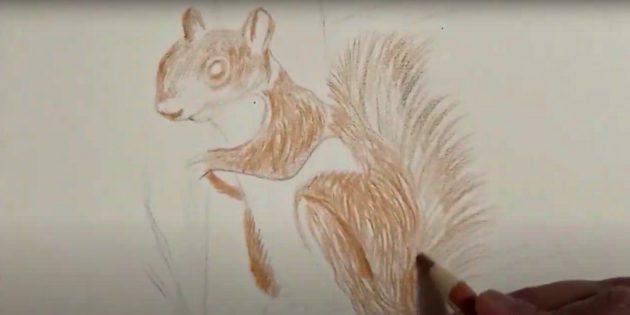 Как нарисовать белку: неплотно закрасьте шерсть светло-коричневым карандашом