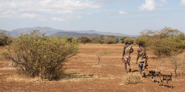 Образ жизни хадза — охота и собирательство