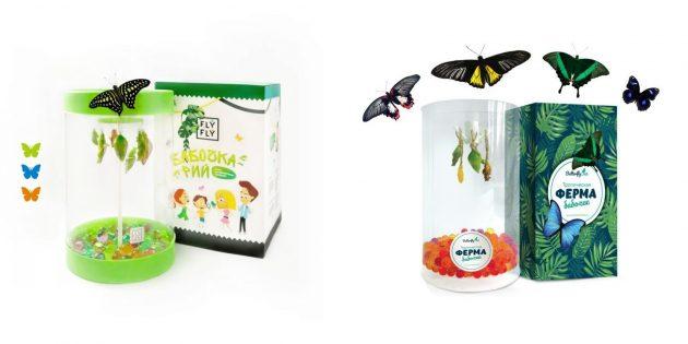 Оригинальные подарки на 8Марта: бабочкарий