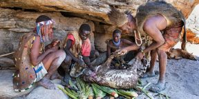 Как образ жизни африканского племени хадза поможет стать здоровее