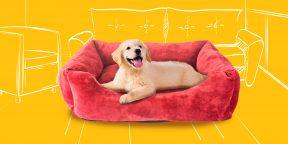 Как помочь щенку освоиться в новом доме: подробная инструкция