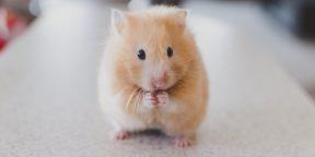 Советуют ветеринары: 10 вещей, которые должен знать каждый владелец домашних животных